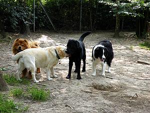 Tagesbetreuung hund